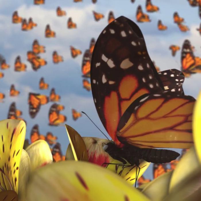 Ziggy Marley : 'Butterflies' le clip