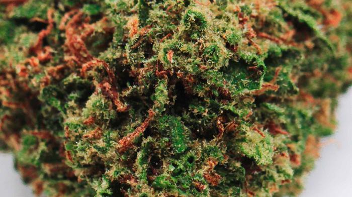 CBD420 : premium cannabis