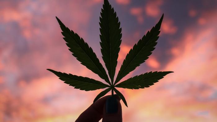 Marche mondial du cannabis samedi
